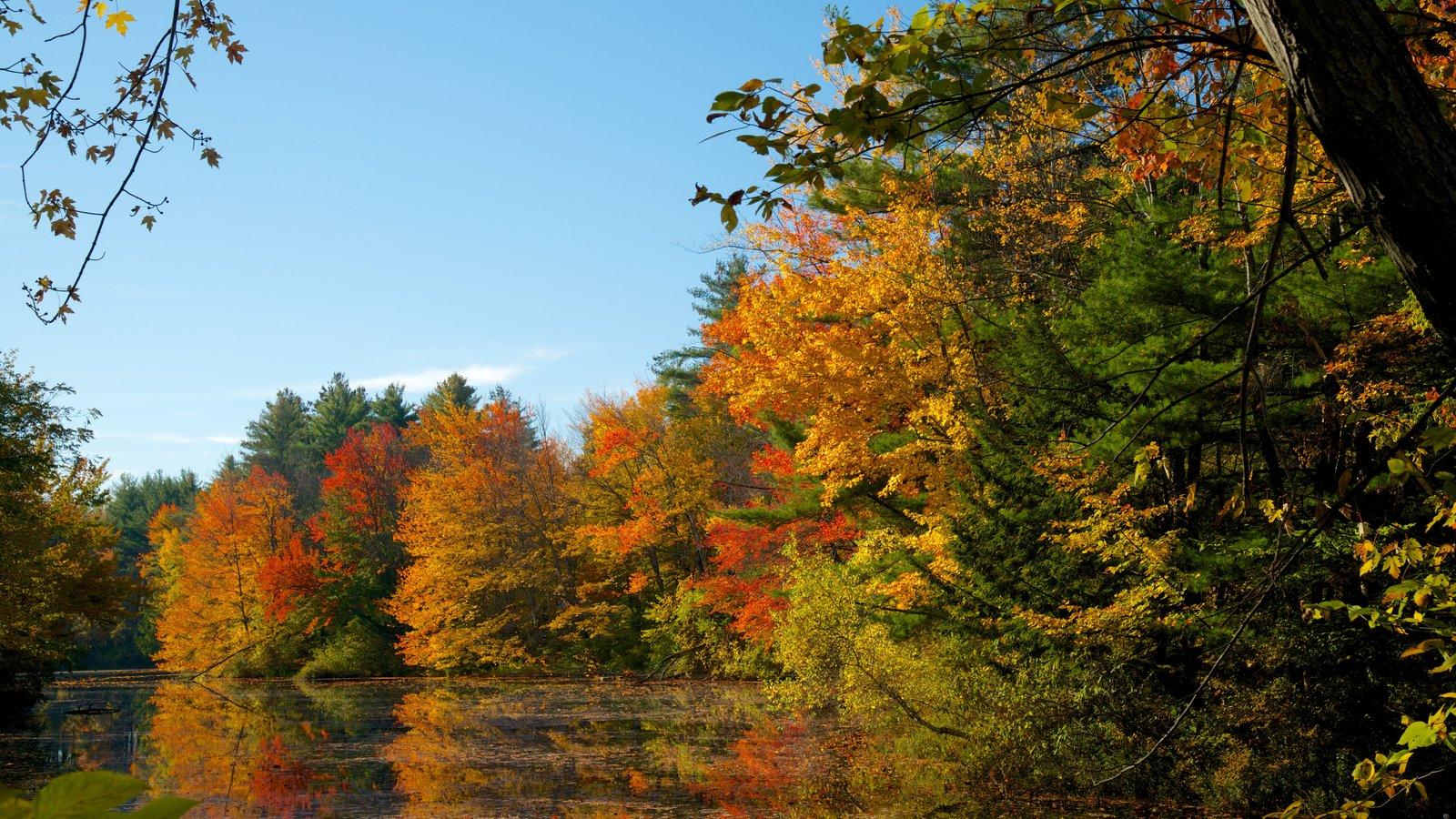 Conway mostrando un río o arroyo, los colores del otoño y un jardín