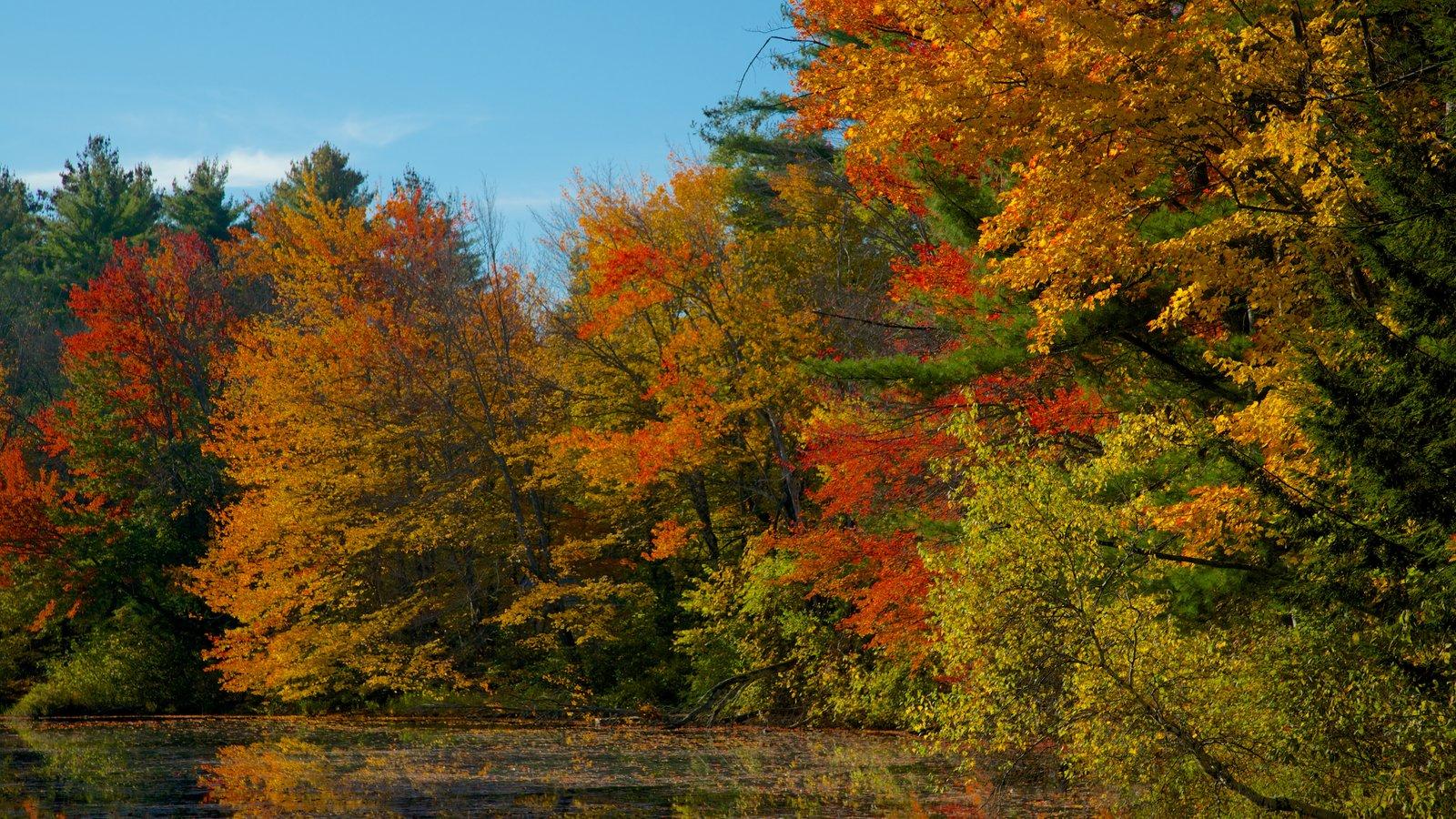 Conway ofreciendo los colores del otoño, un jardín y un río o arroyo