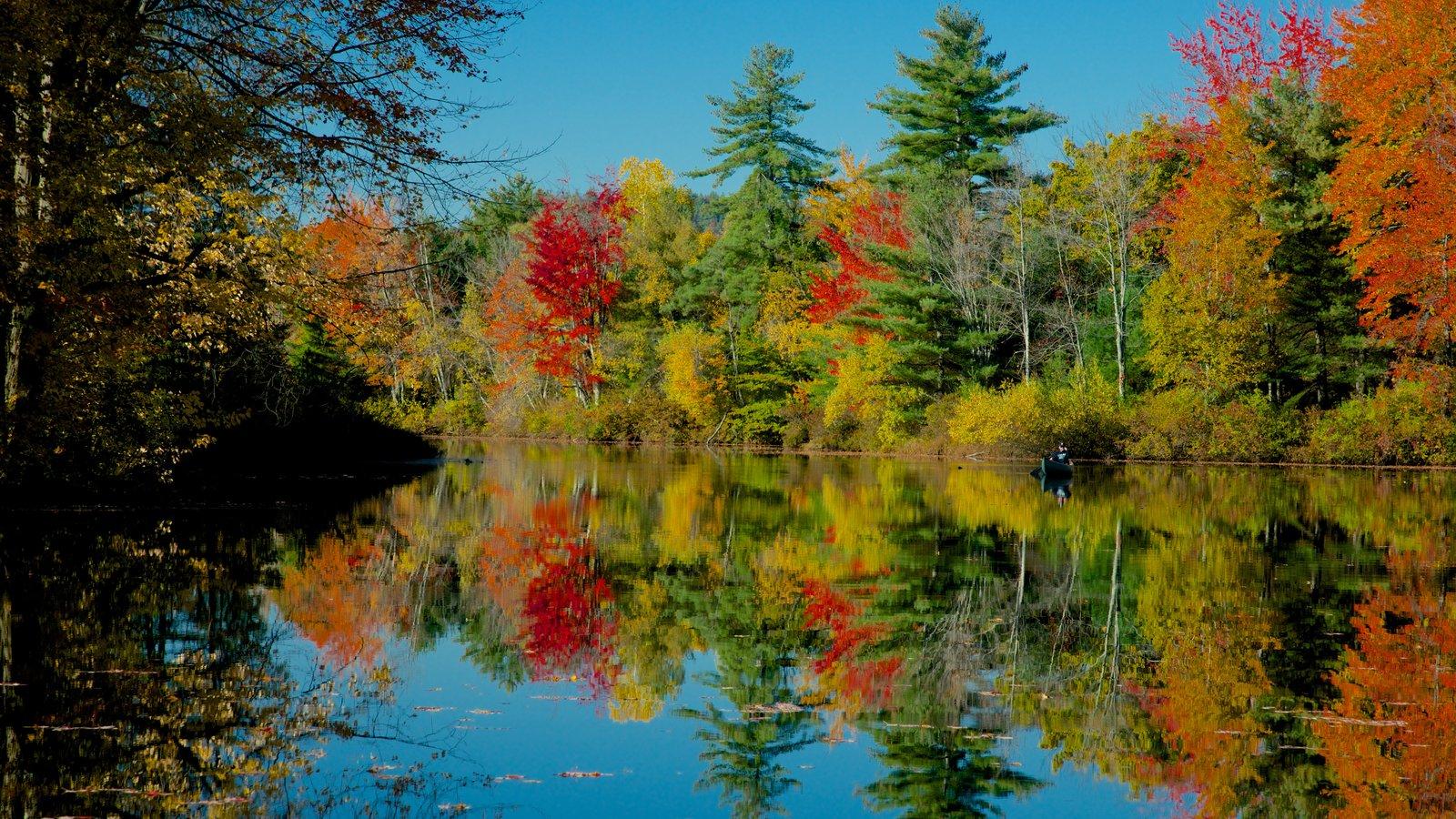 Conway que incluye hojas de otoño, un jardín y un río o arroyo