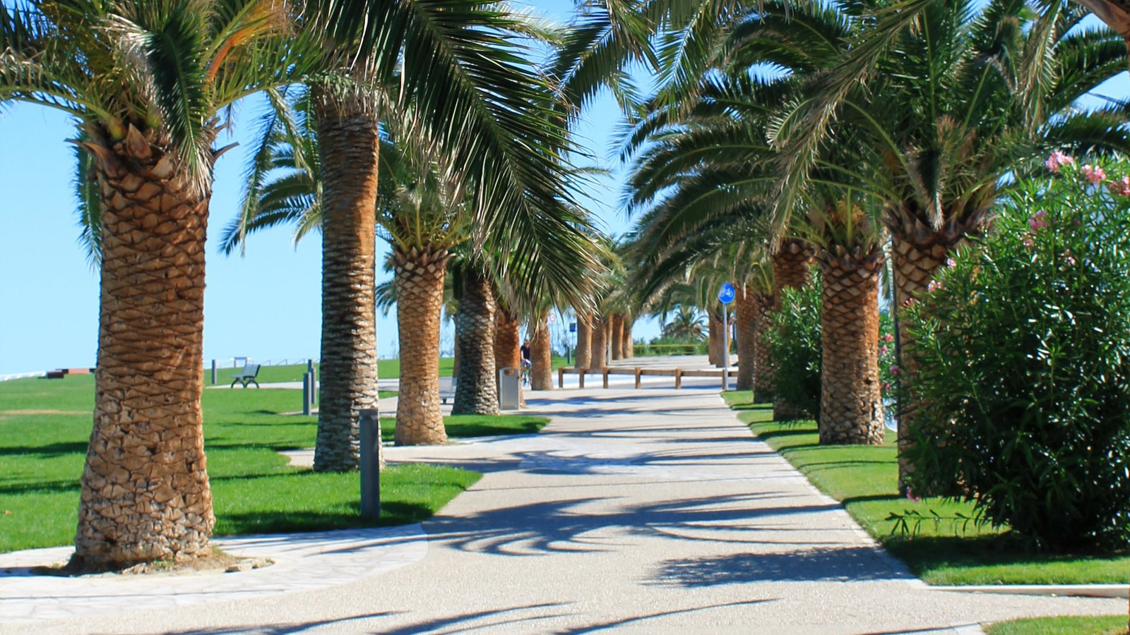 San Benedetto del Tronto featuring tropical scenes and a park