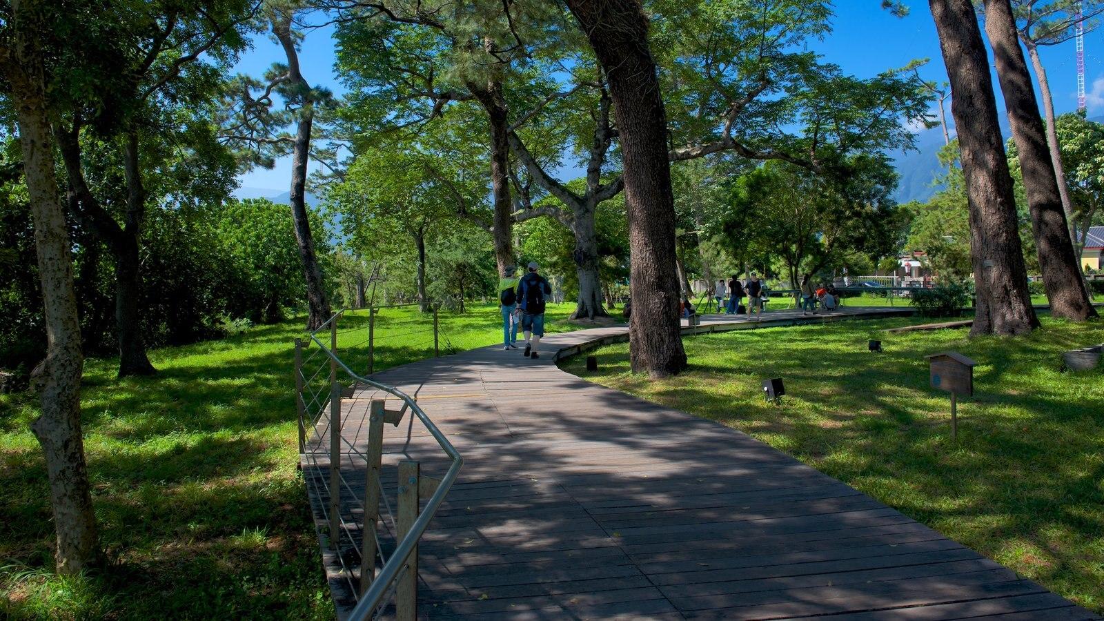 Fotos de parques y jardines ver im genes de jard n de pinos for Pinos para jardin