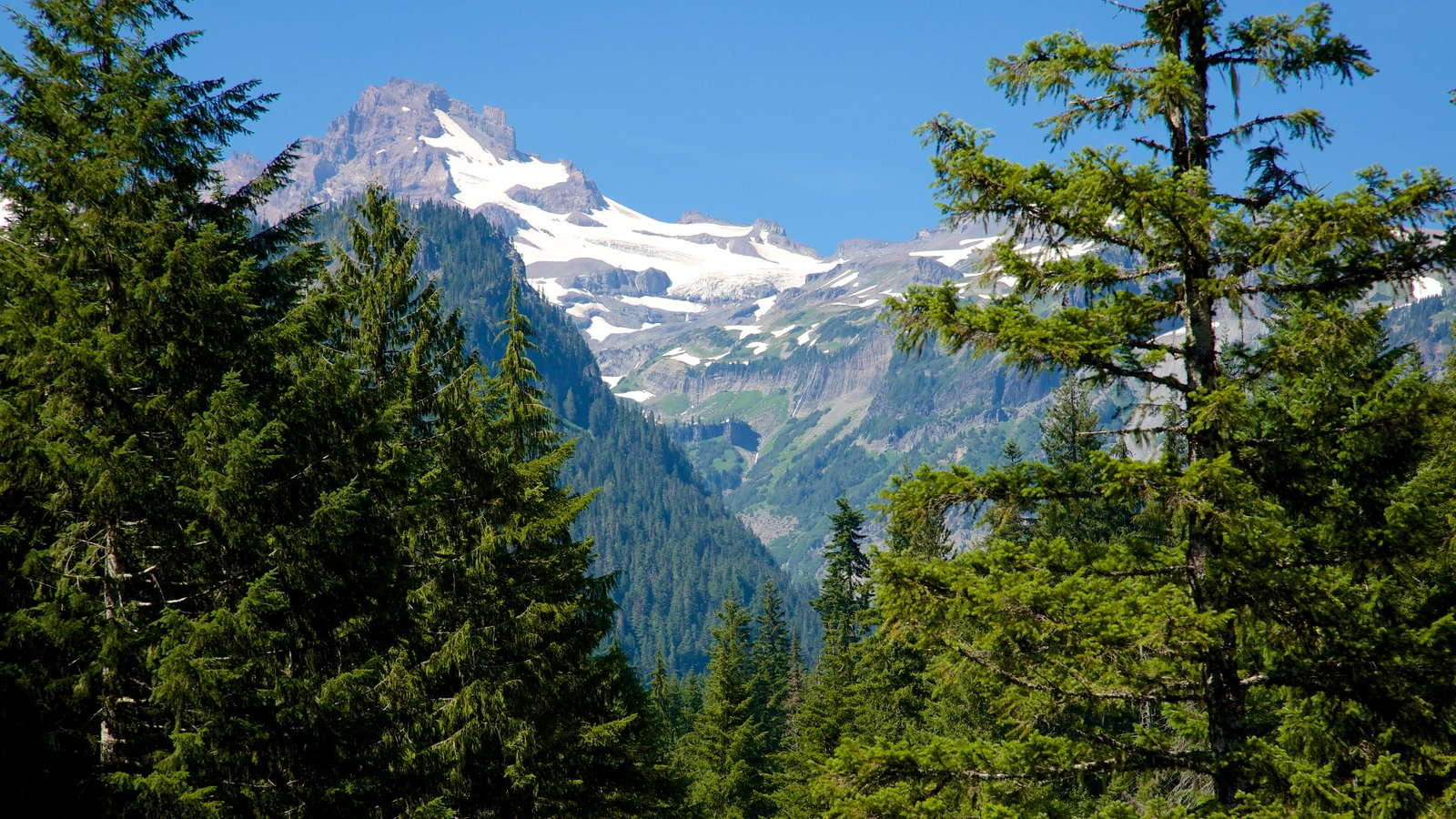 Mount Rainier National Park featuring forests, mountains and landscape views