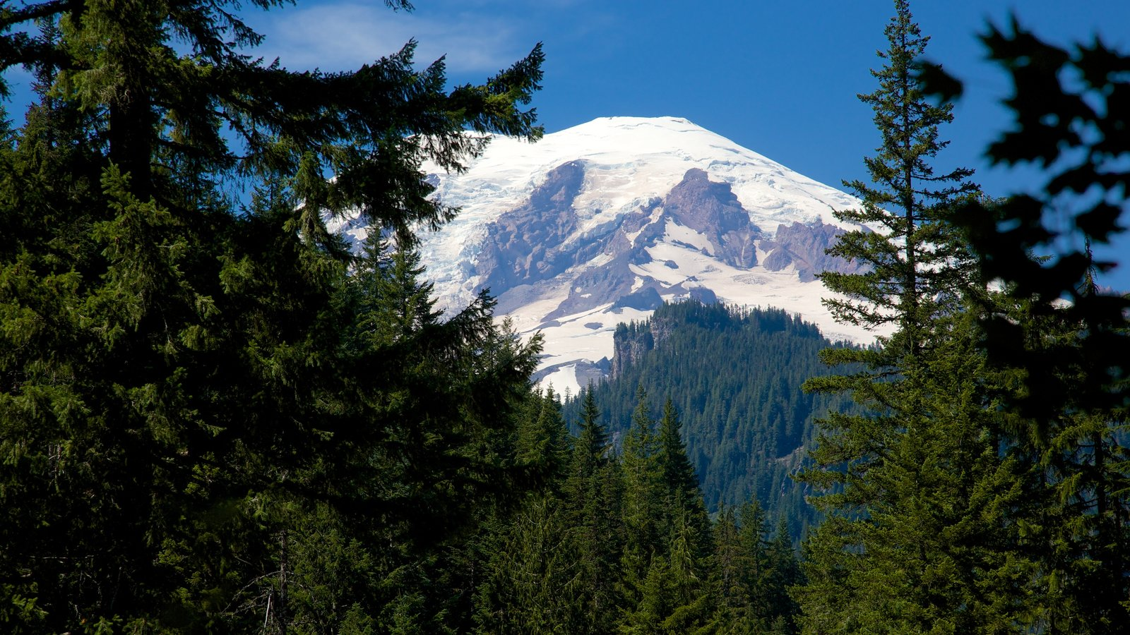 Mount Rainier National Park featuring tranquil scenes, forest scenes and snow