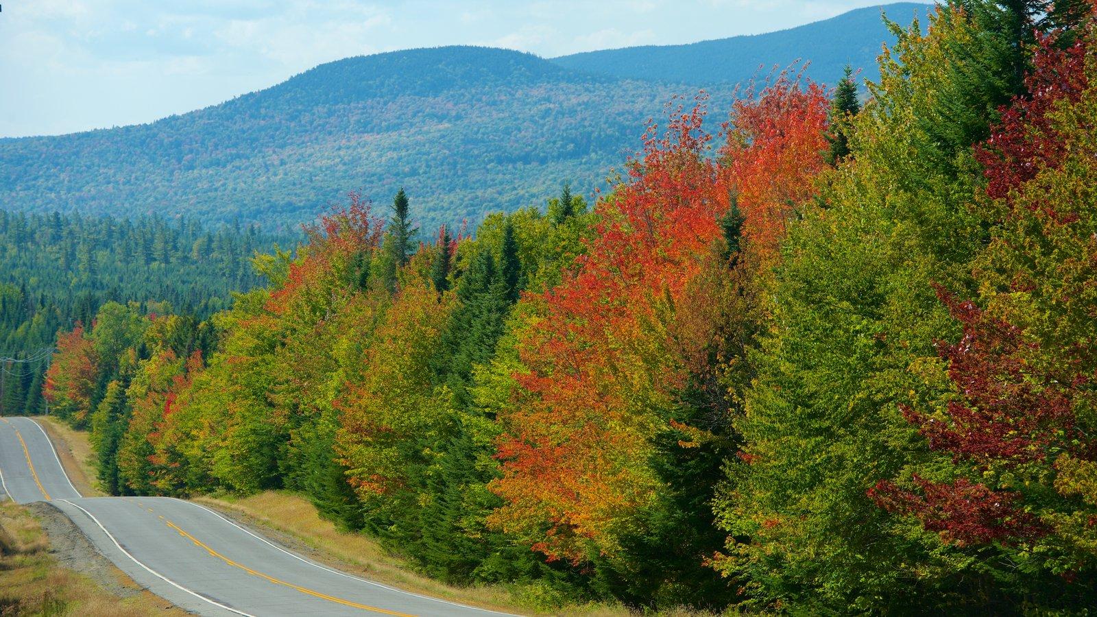 Maine mostrando bosques, hojas de otoño y escenas tranquilas