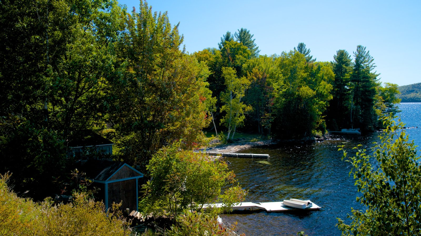 Maine showing forest scenes and a lake or waterhole