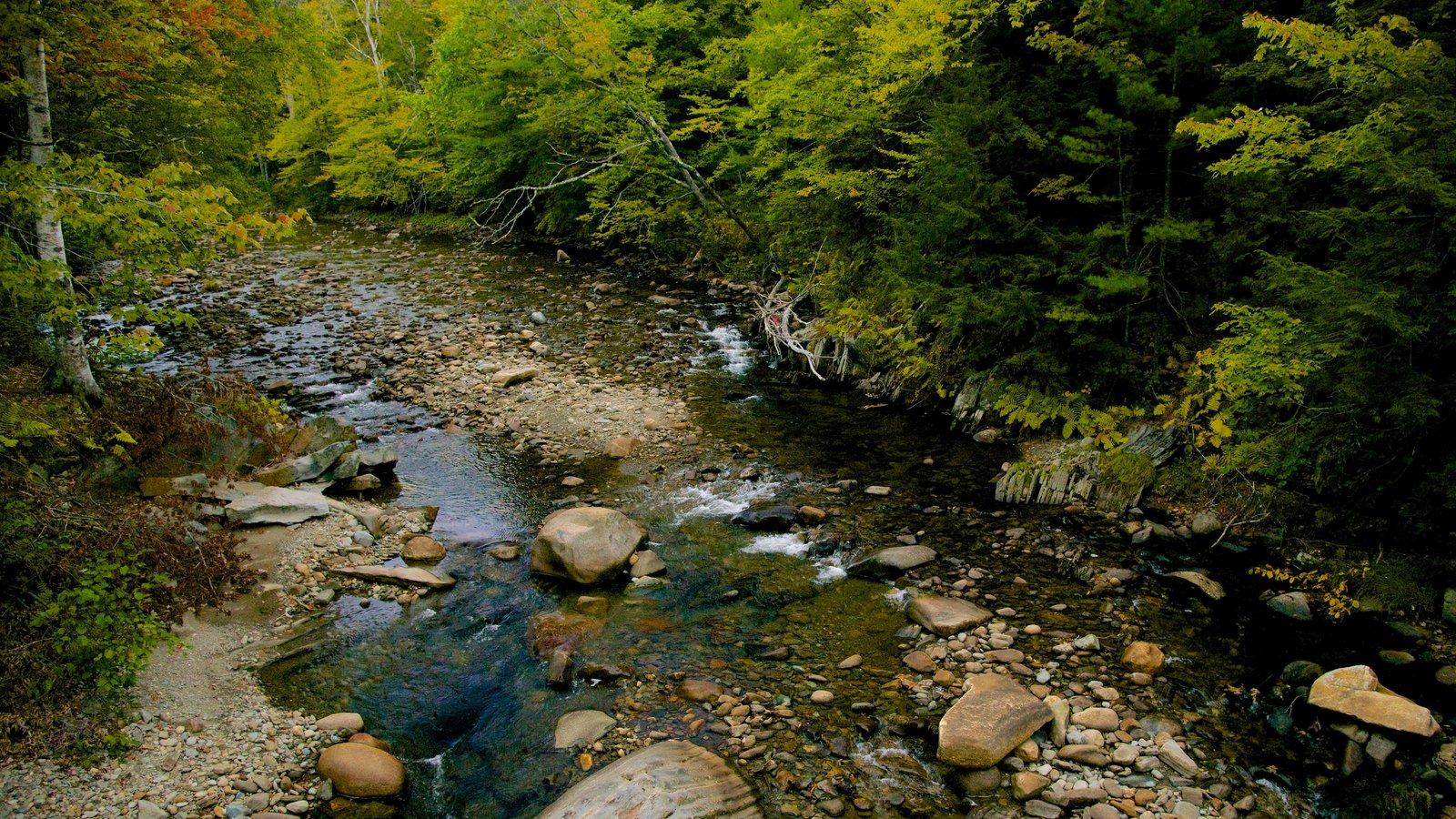 Maine que incluye bosques y un río o arroyo