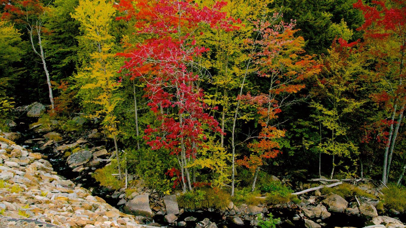 Maine ofreciendo escenas forestales, un río o arroyo y los colores del otoño