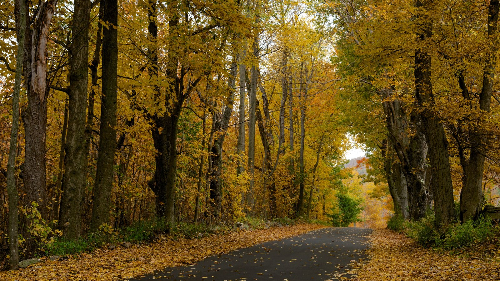 Massachusetts showing tranquil scenes, forests and fall colors