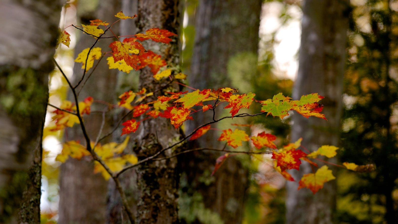 Acadia - Costa septentrional ofreciendo los colores del otoño