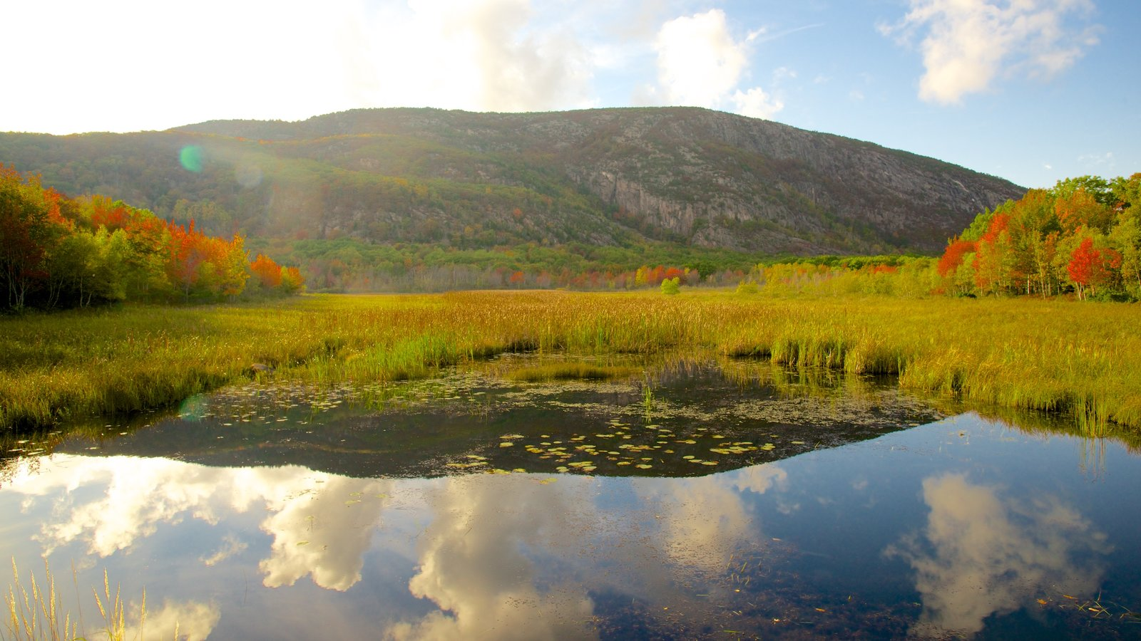 Acadia - North Coast featuring tranquil scenes and a pond