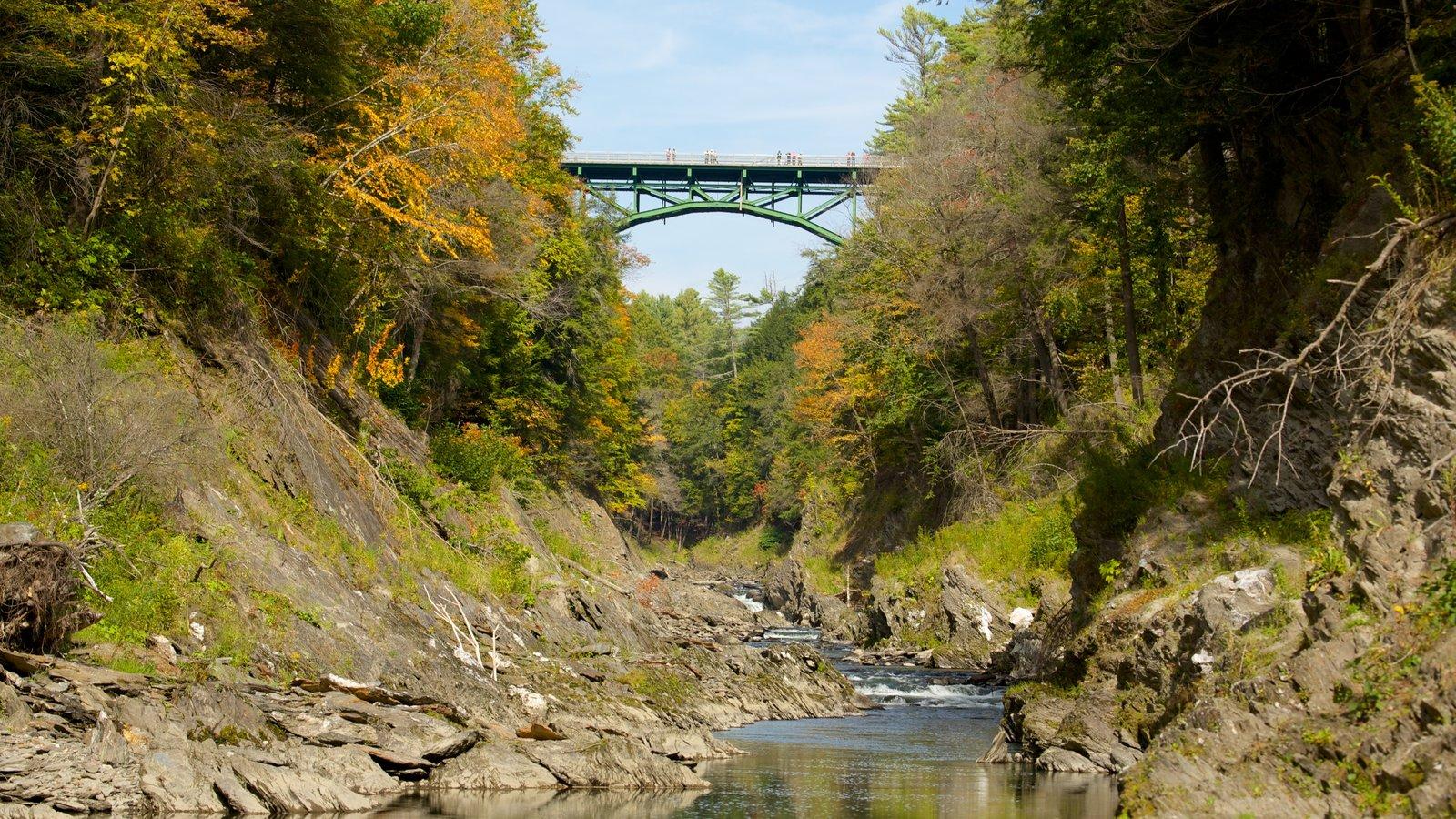 Quechee mostrando escenas tranquilas, un río o arroyo y escenas forestales