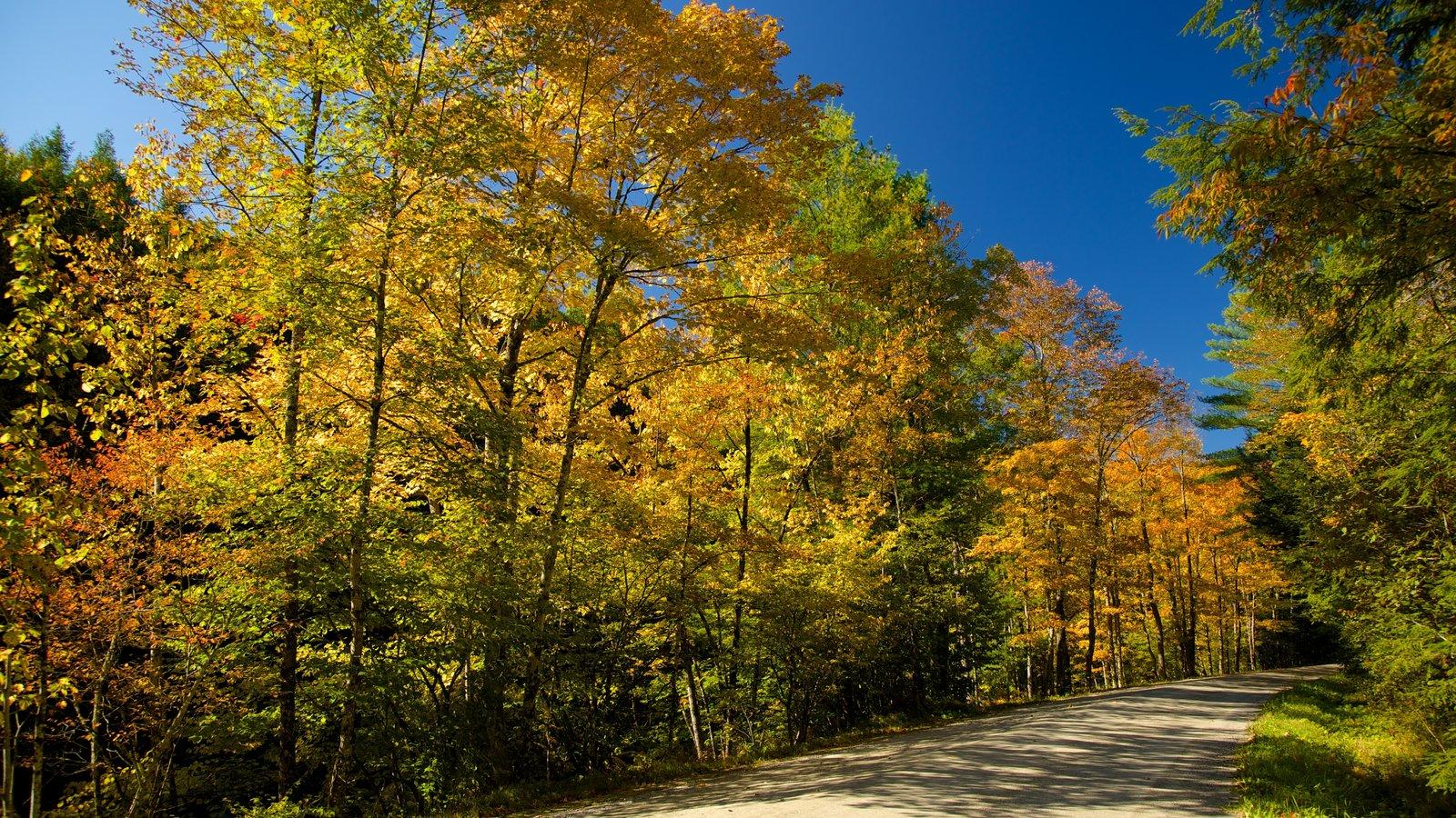 Vermont Septentrional mostrando escenas forestales y hojas de otoño