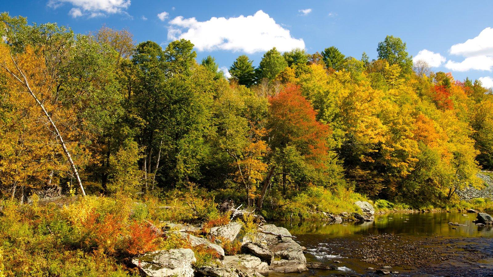 Vermont Septentrional que incluye escenas forestales, un río o arroyo y los colores del otoño