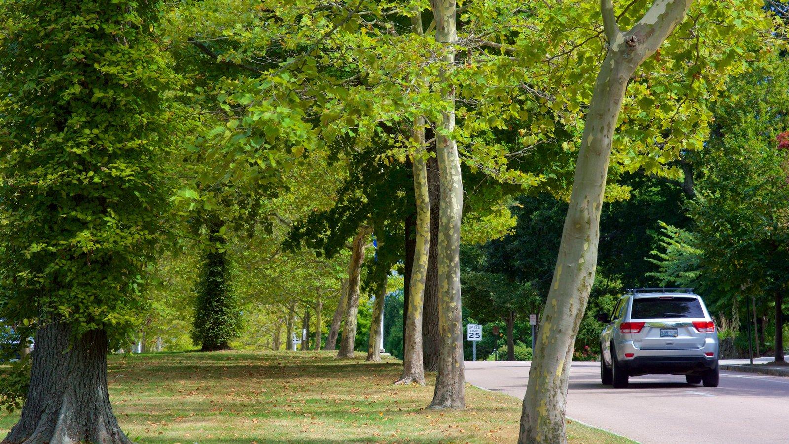 Newport mostrando un parque