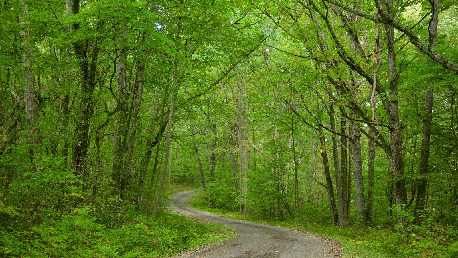 Noroeste de Pensilvânia mostrando florestas e floresta tropical