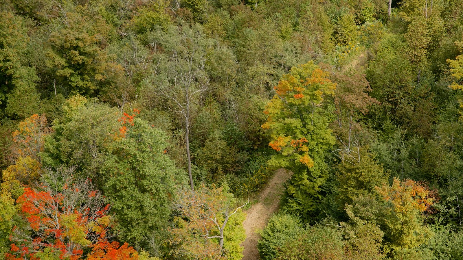 Noroeste de Pensilvânia que inclui cenas de floresta