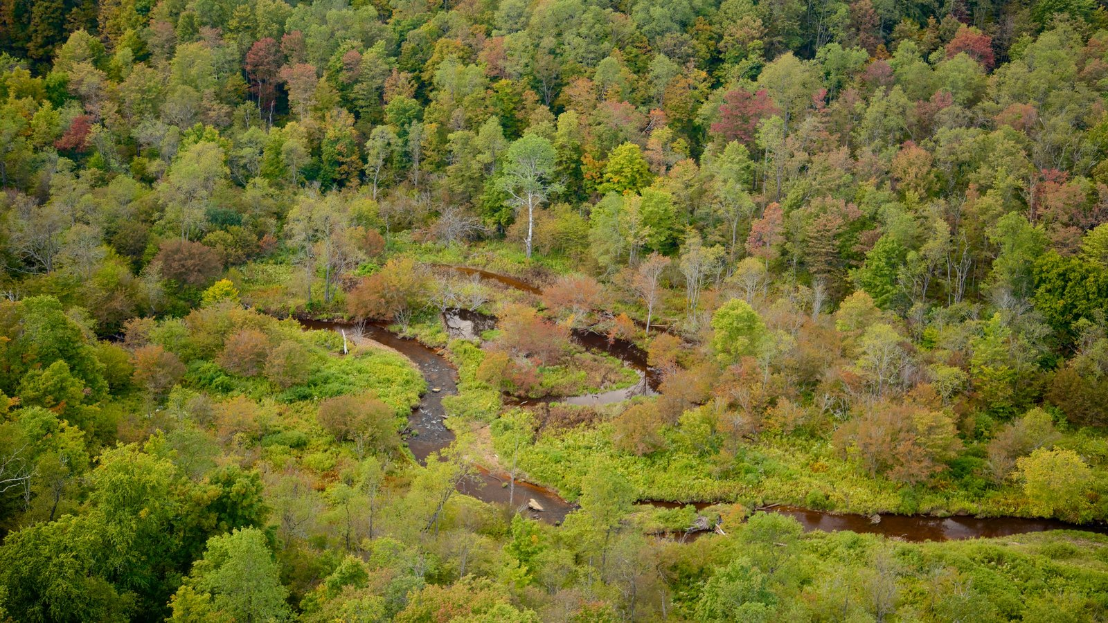 Noroeste de Pensilvânia caracterizando cenas de floresta e um rio ou córrego