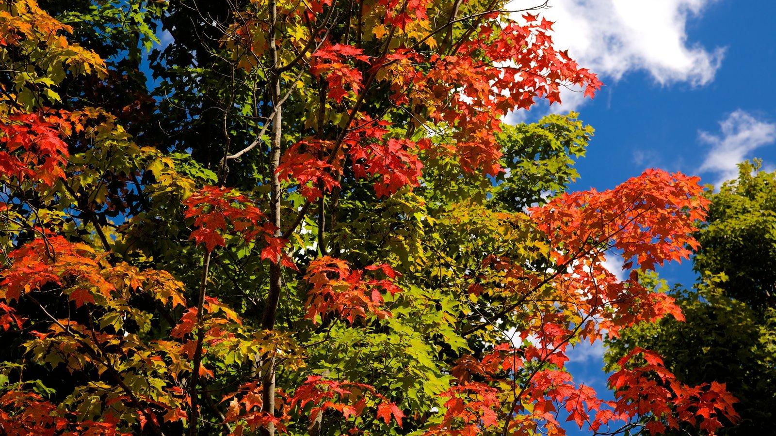 Noroeste de Pensilvânia caracterizando folhas de outono