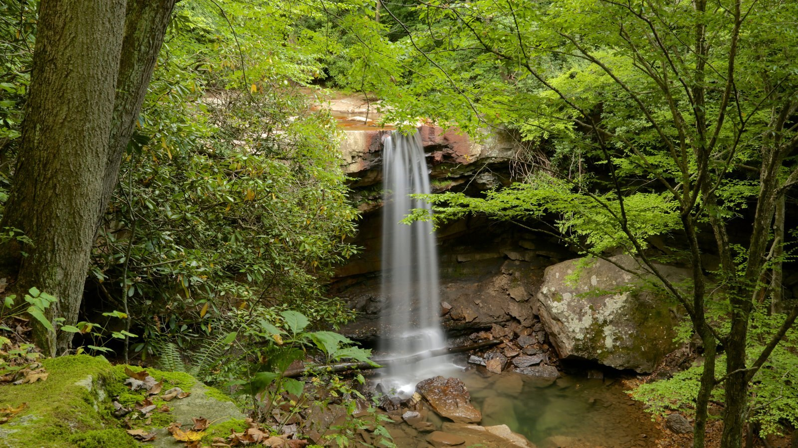 Uniontown mostrando uma cascata e floresta tropical