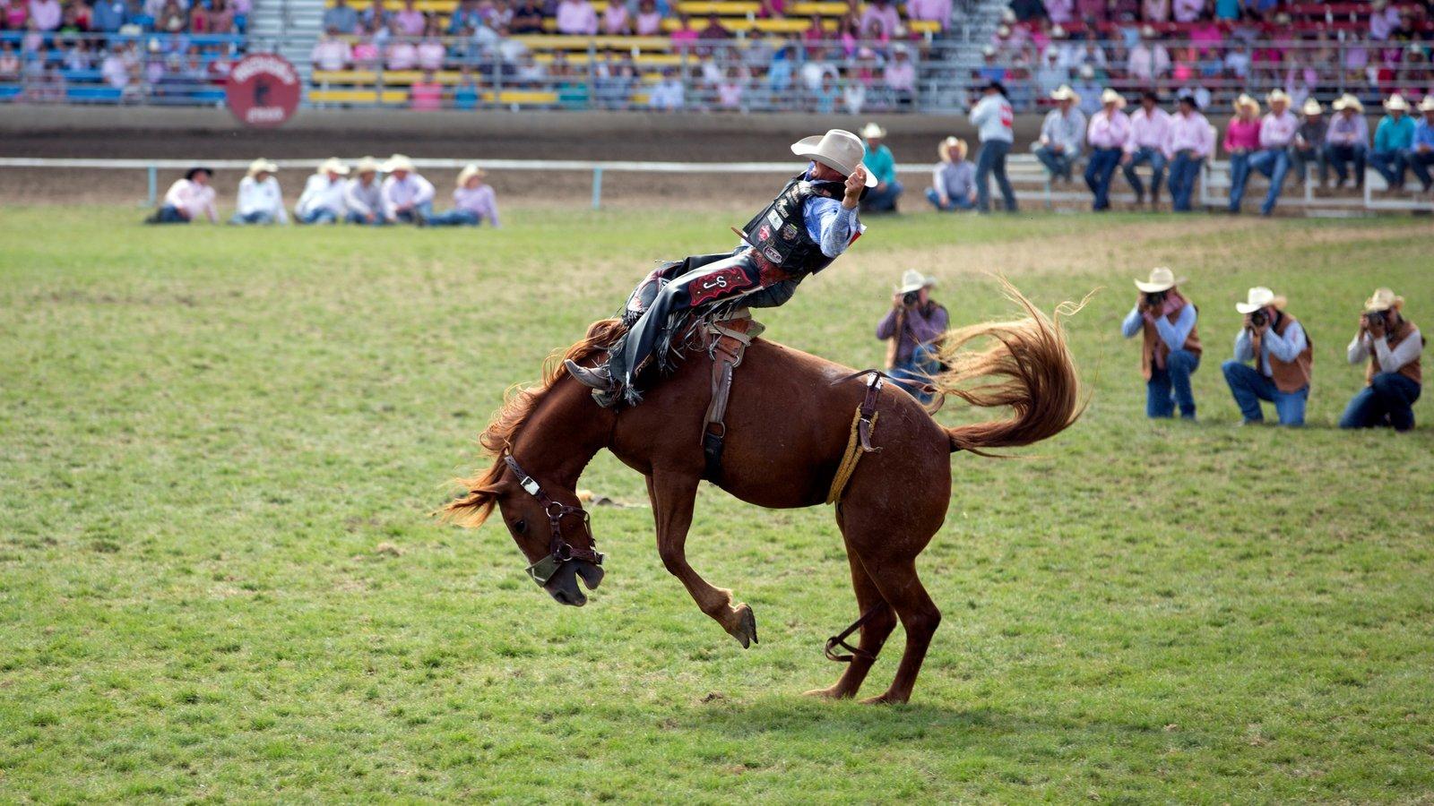 Pendleton que incluye animales terrestres y un evento deportivo