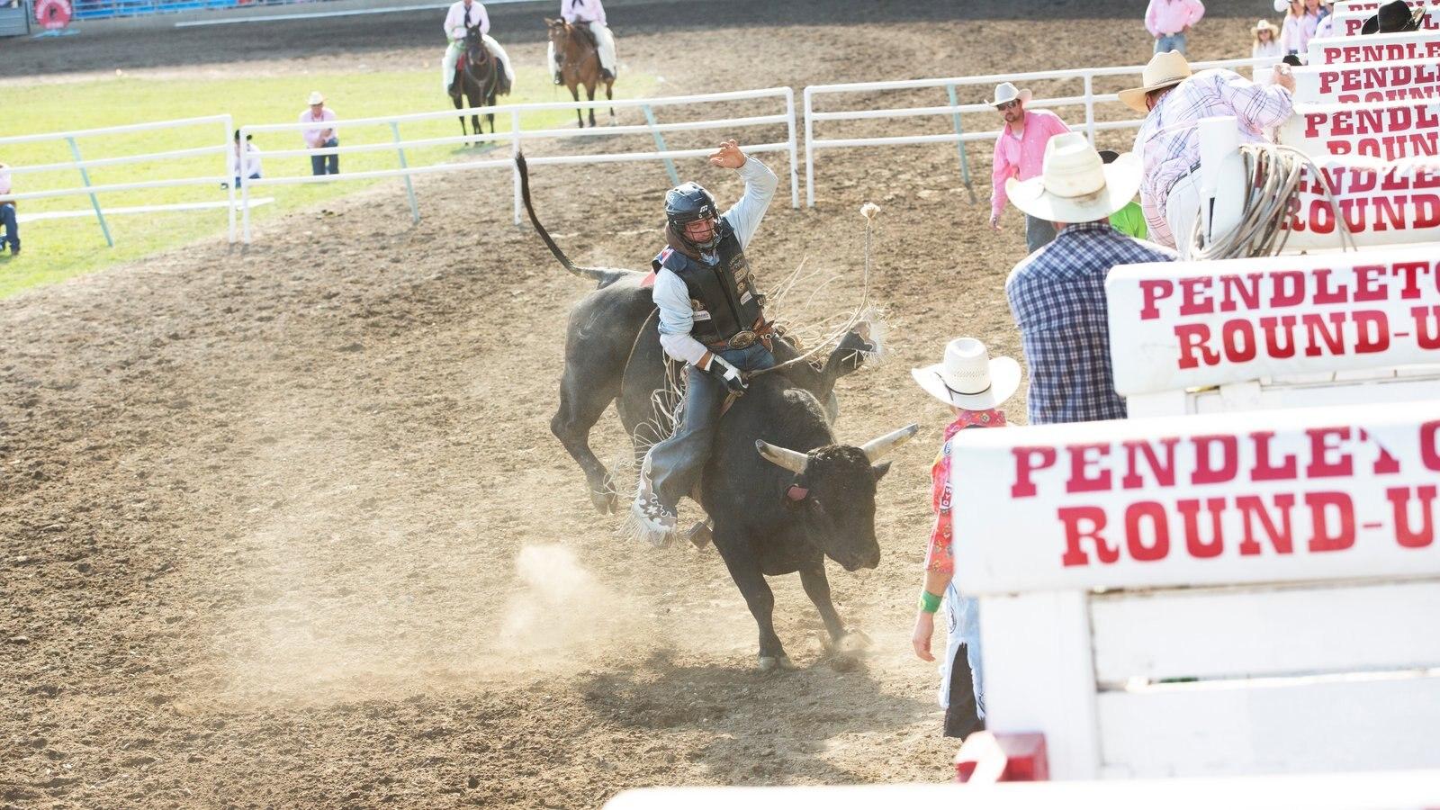 Pendleton que incluye un evento deportivo y animales terrestres