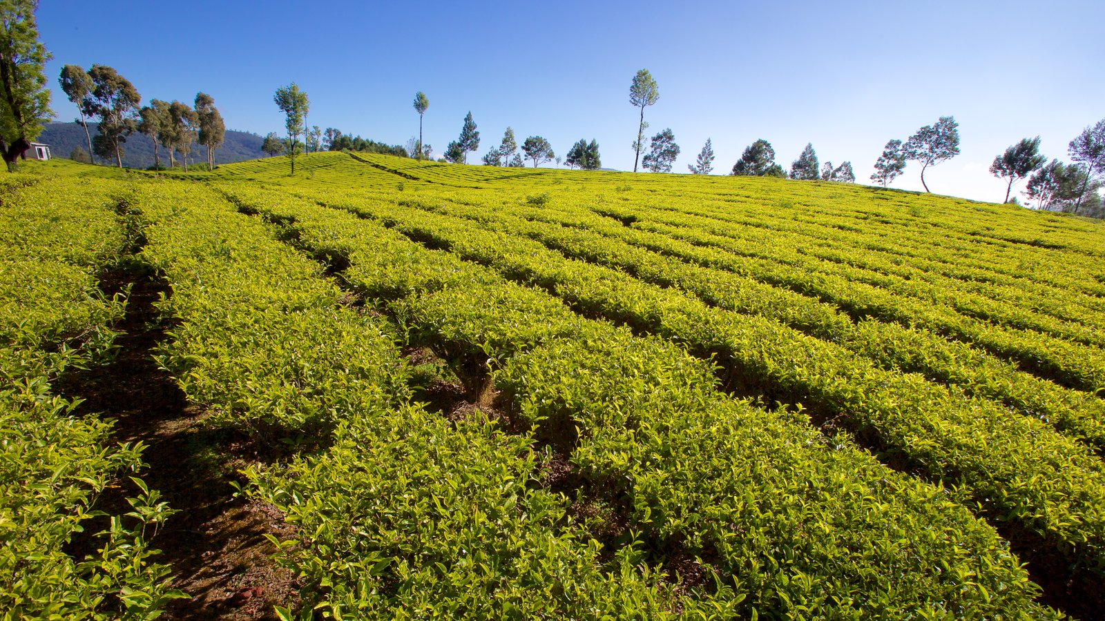 Ooty which includes farmland and tranquil scenes