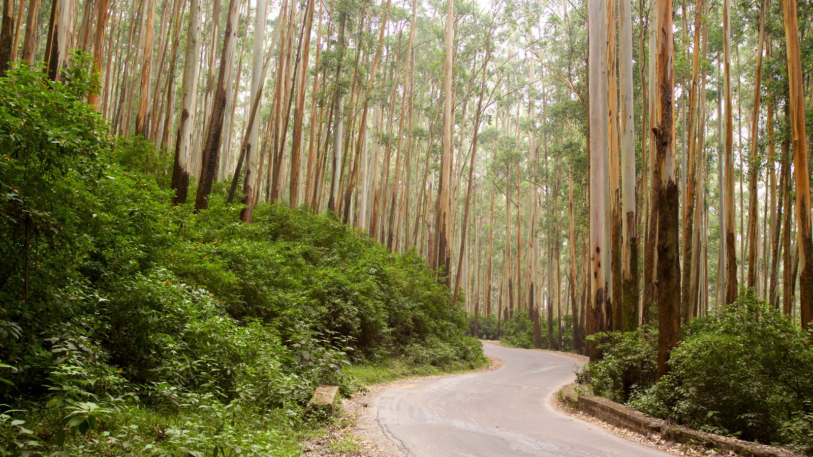 Ooty featuring forests