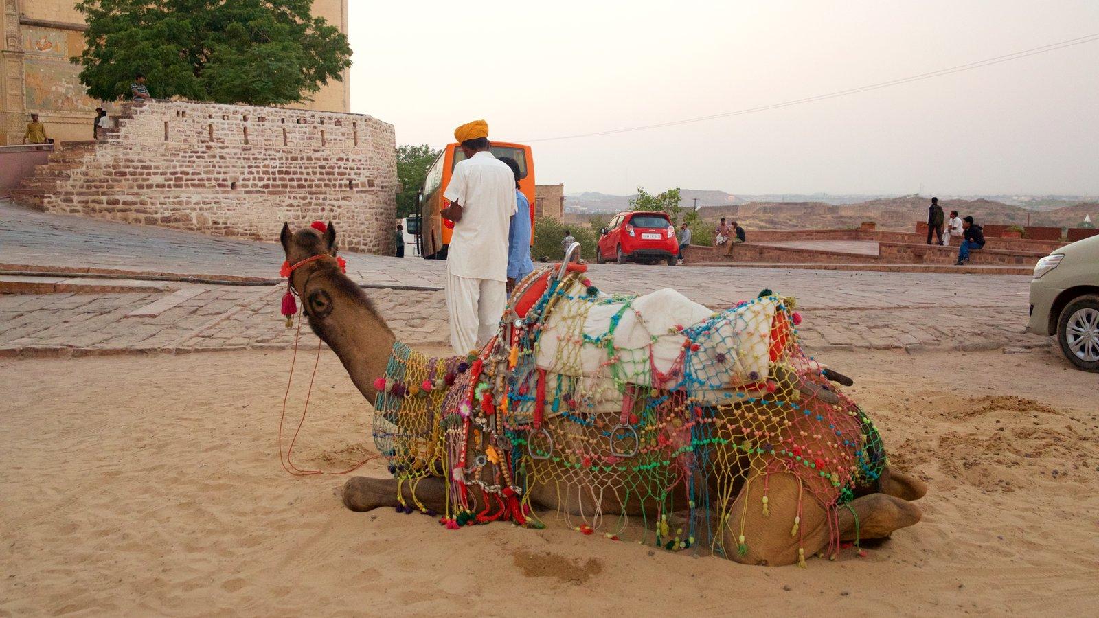 Mehrangarh Fort ofreciendo vistas al desierto y animales terrestres