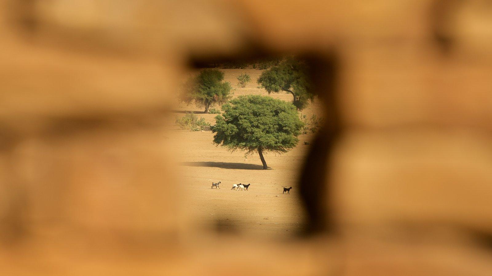 Khaba Fort featuring desert views
