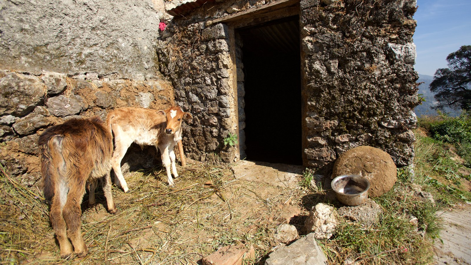 Dehradun showing animals