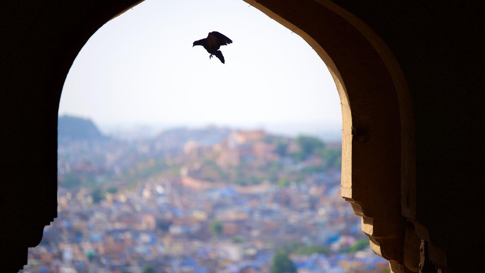 Mehrangarh Fort mostrando elementos del patrimonio y vida de las aves