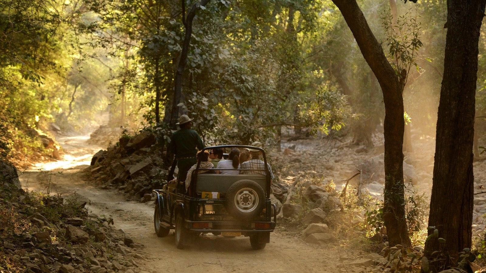 Ranthambore National Park showing 4 wheel driving