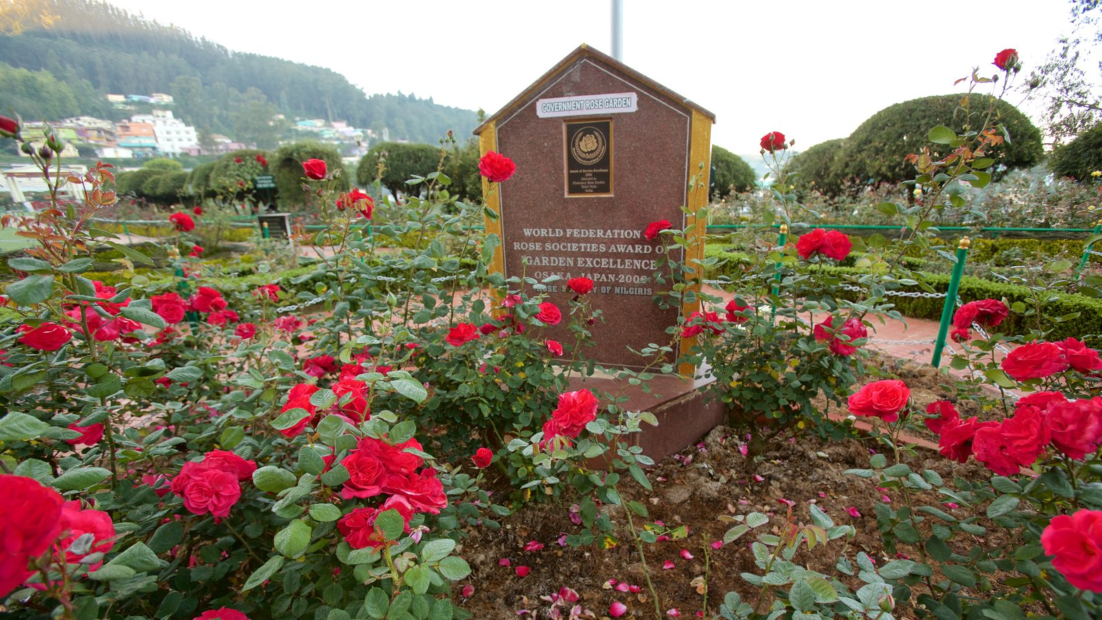 Ooty Rose Garden pictures: View photos and images of Ooty Rose Garden