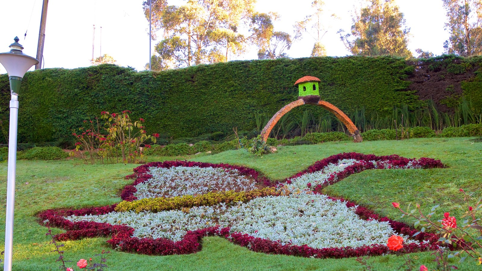 Image gallery ooty rose garden for Garden pictures