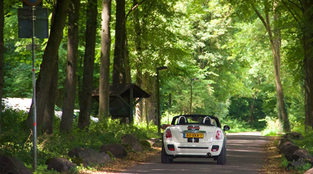 Maastricht featuring forests and touring
