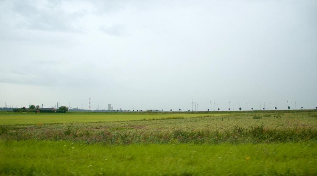 Zelândia mostrando fazenda e cenas tranquilas
