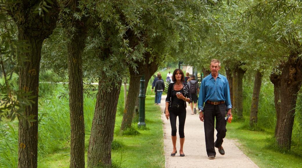 Zaanse Schans som visar vandring och en trädgård såväl som ett par