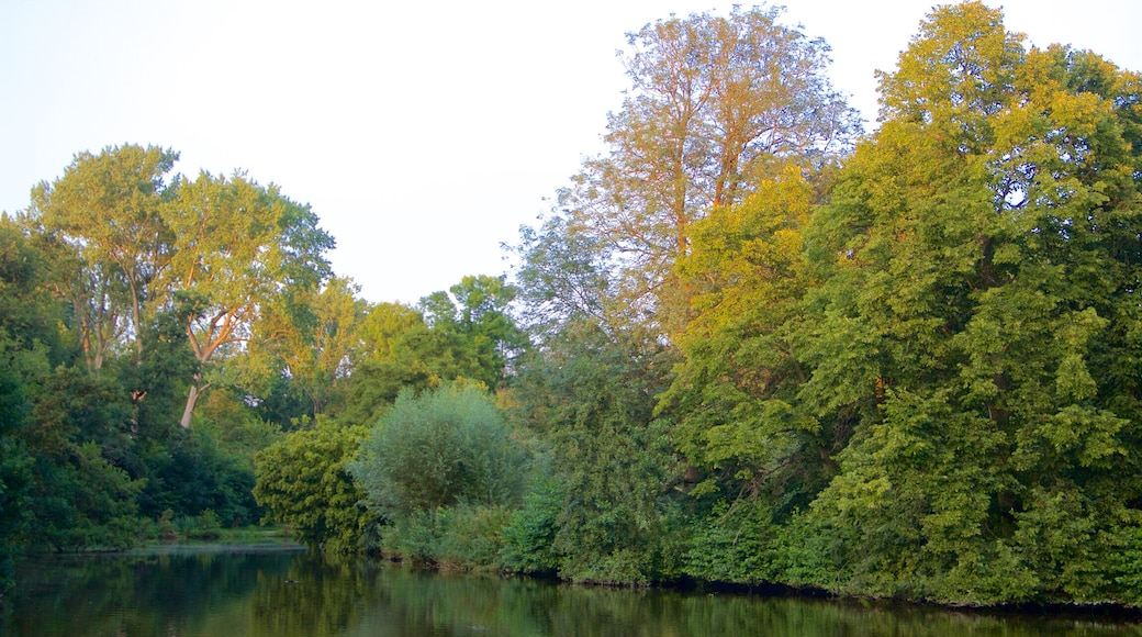 Vondelpark showing a park and a lake or waterhole