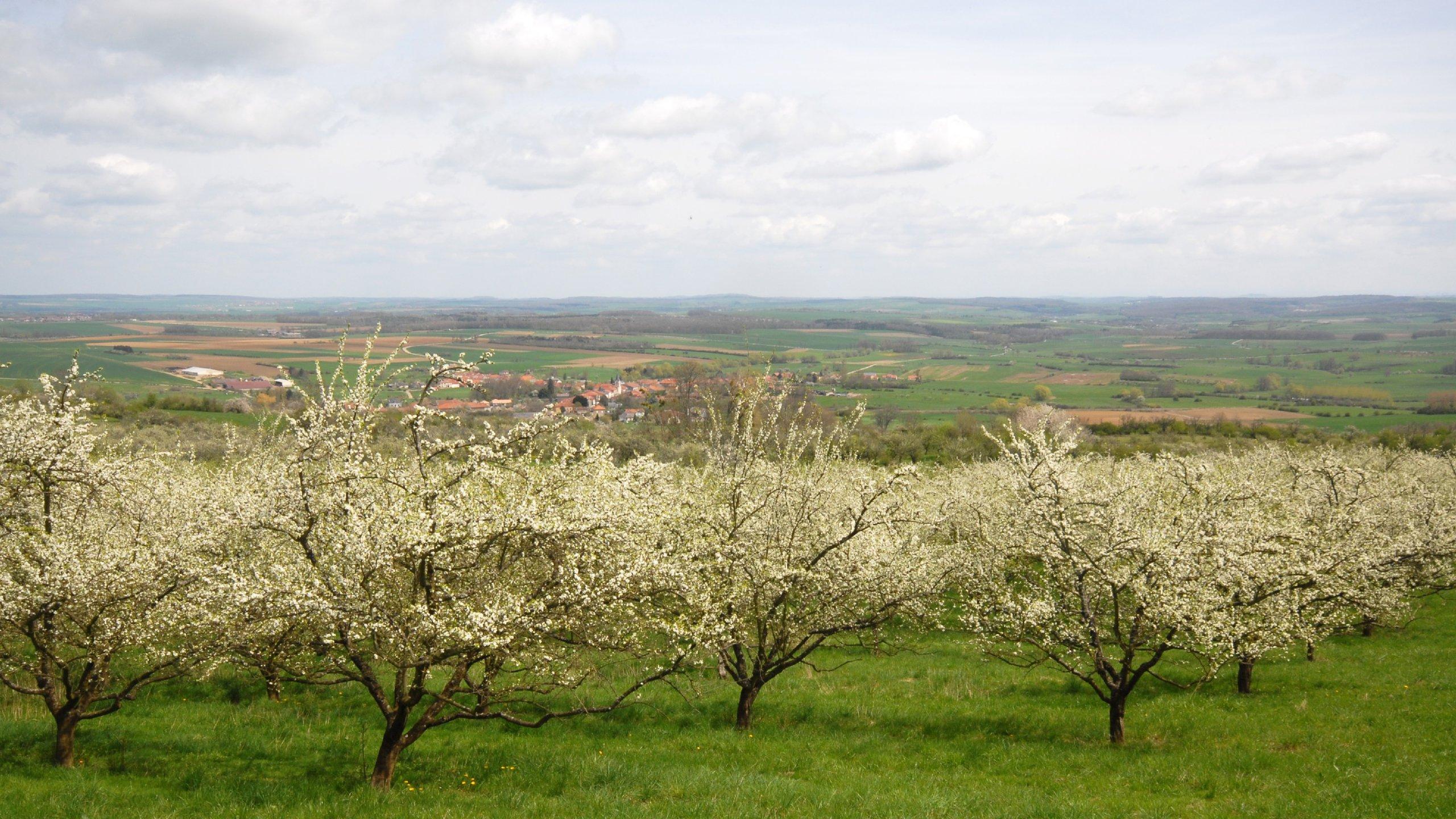 Grand Auch Coeur de Gascogne, Gers, France