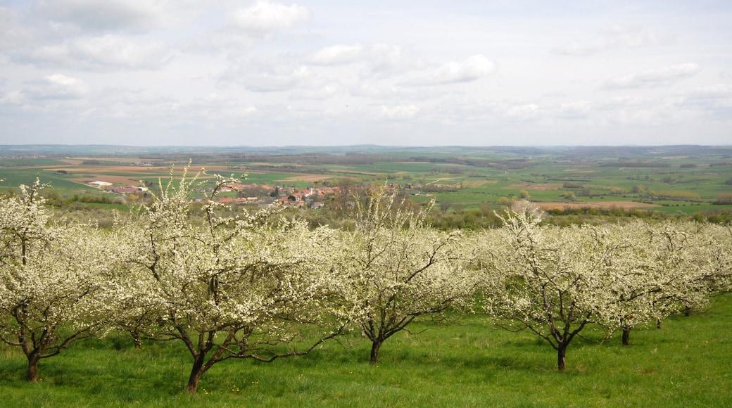 Auch - Gers mettant en vedette scènes tranquilles et jardin