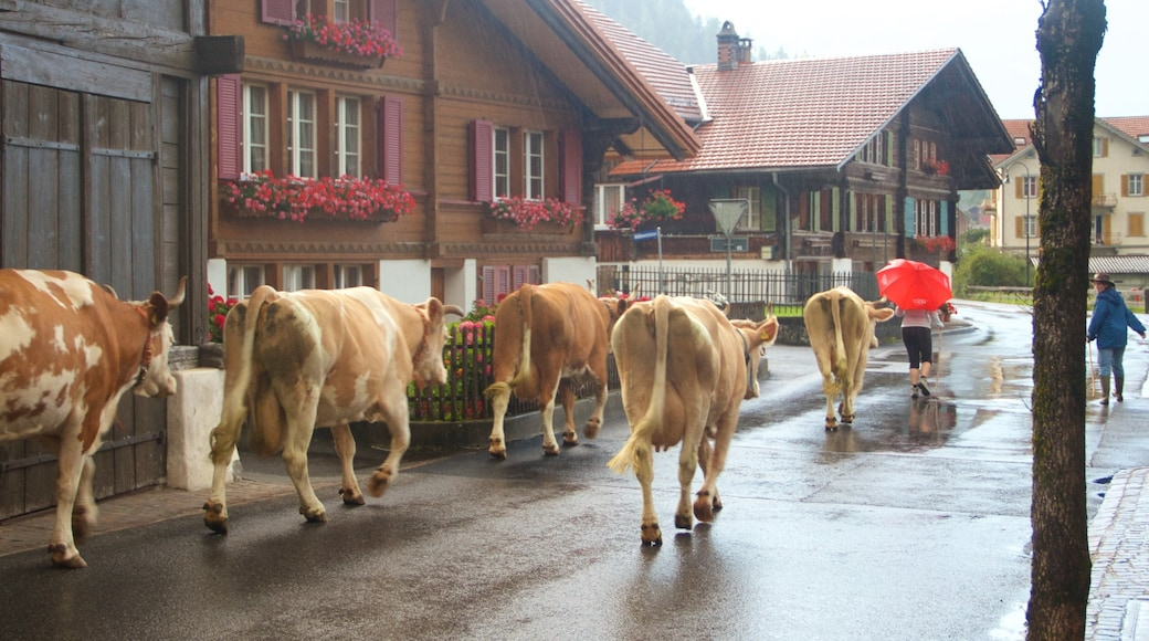 Wilderswil featuring land animals and a small town or village