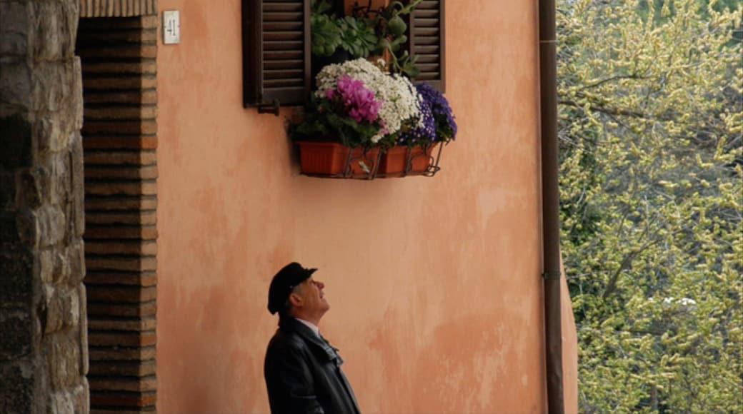 Sirolo montrant fleurs aussi bien que homme