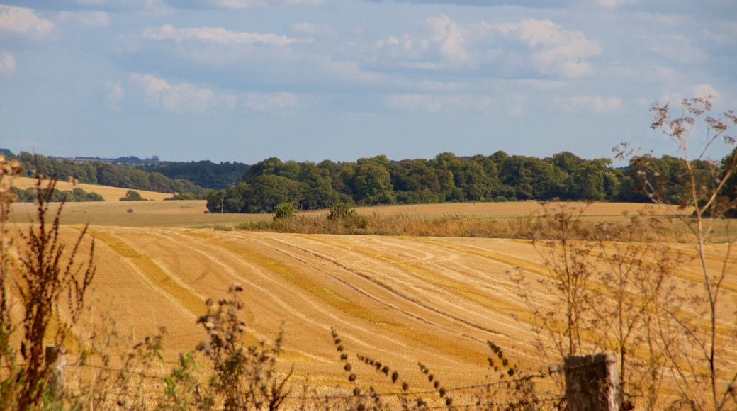 Wiltshire showing farmland and tranquil scenes