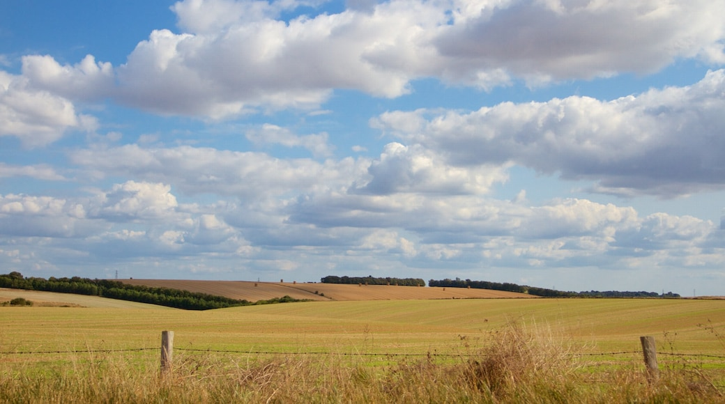 Wiltshire which includes farmland and tranquil scenes