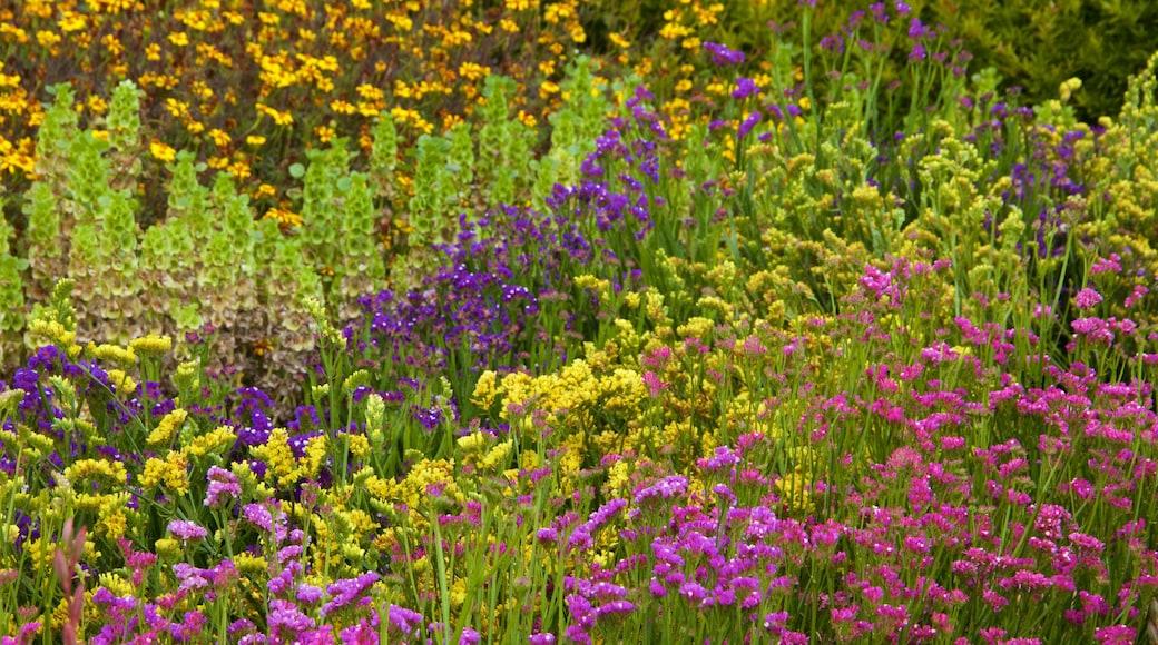 Lost Gardens of Heligan montrant fleurs et fleurs sauvages