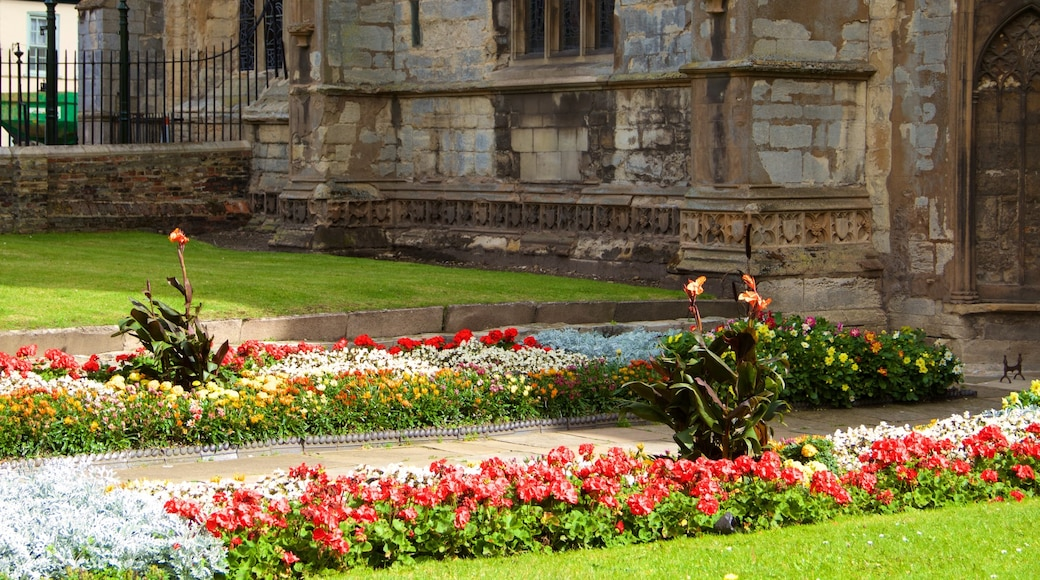King\'s Lynn showing a park and flowers