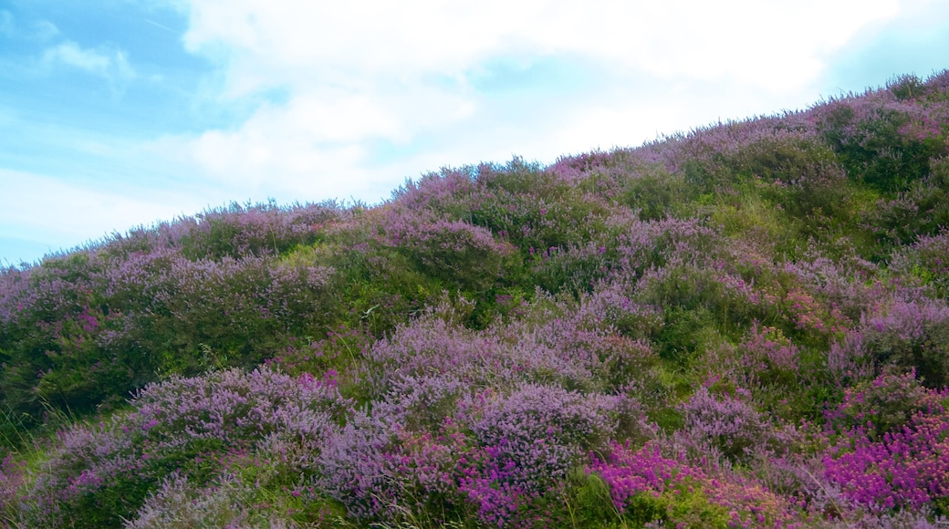 Exmoor National Park featuring wild flowers