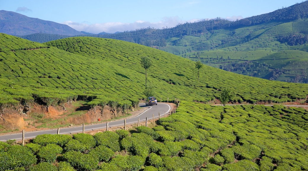 Idukki District featuring landscape views and tranquil scenes