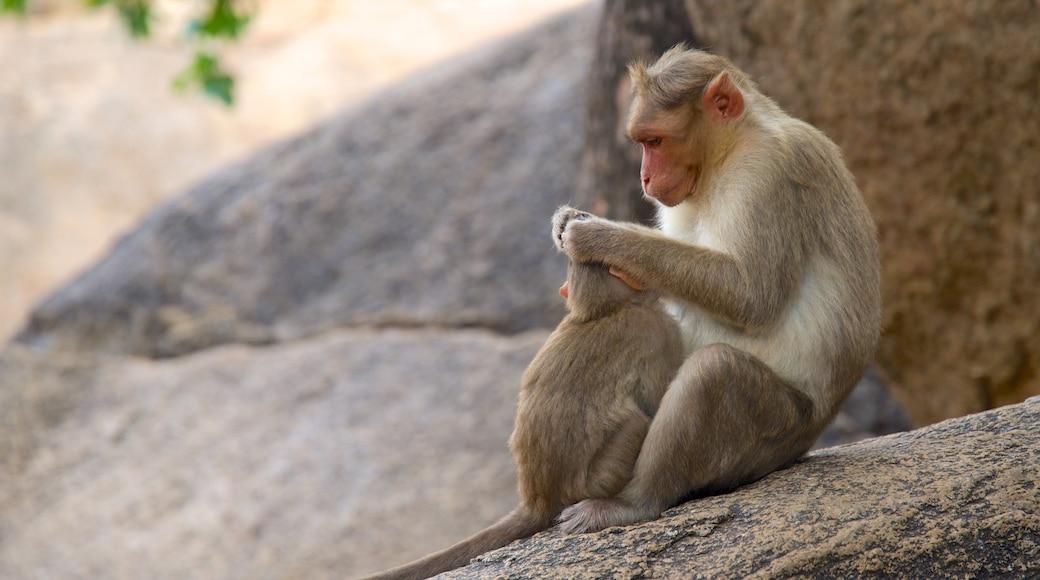 Madras mettant en vedette animaux