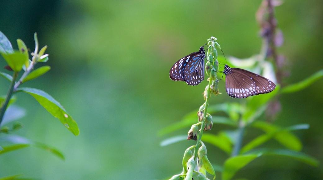 Kumarakom Bird Sanctuary featuring animals